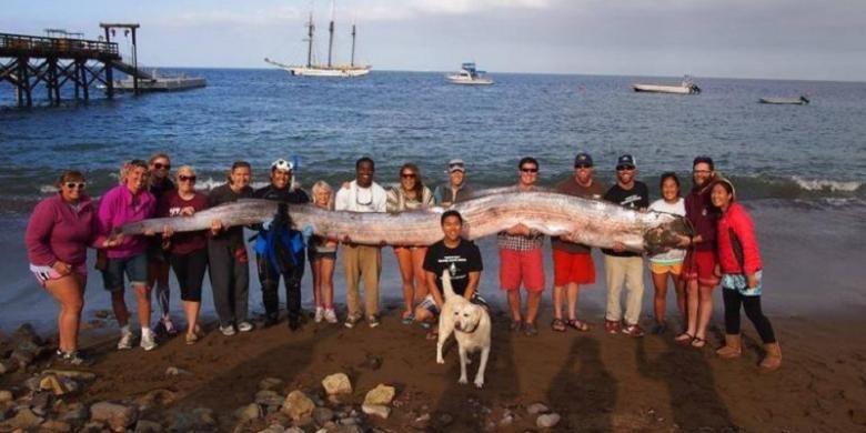 Seekor oarfish yang panjangnya mencapai 5,5 meter ditemukan di lepas pantai California.