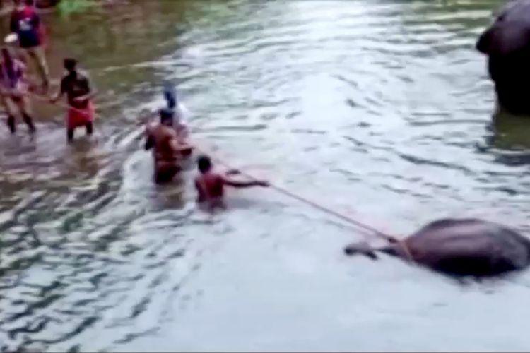 Warga desa berusaha menarik gajah bunting yang mati karena makan buah berisi petasan di distrik Palakkad, India, pada 27 Mei 2020.