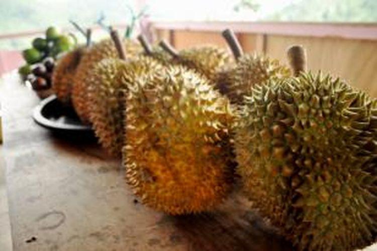 Sejumlah buah-buahan ini asli dari kebun para warga di Kampung Inggris, Kabupaten Kolaka Utara, Sulawesi Tenggara. Selain bisa menikmati kearifan lokal, tempat itu juga cocok untuk penikmat buah-buahan.