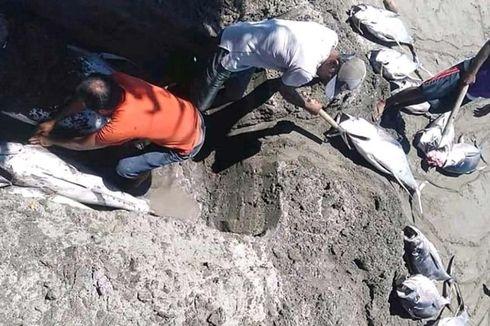 Heboh Nelayan di Maluku Utara Kubur Ikan Tuna 2 Ton Hasil Tangkapan, Ini Penyebabnya