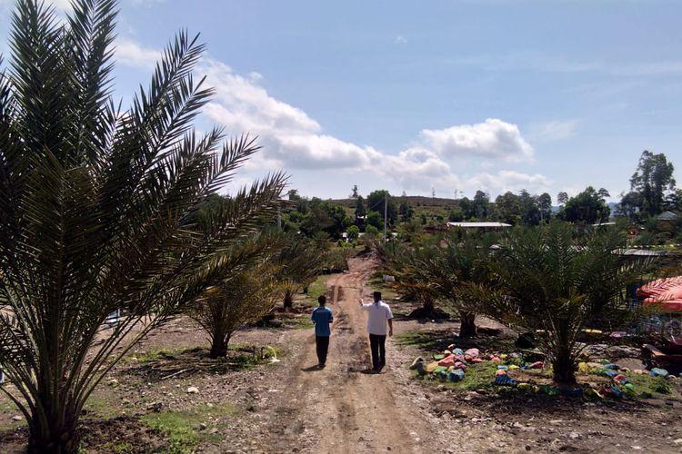 Kebun kurma Barbate di Krueng Raya, Kabupaten Aceh Besar