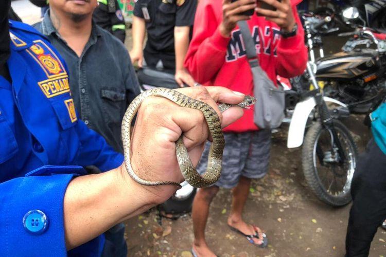 Petugas UPT Pemadam Kebakaran Kota Malang saat mengevakuasi ular dari dalam motor warga, Selasa (22/6/2021).