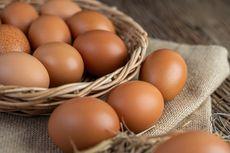 Harga Telur Melonjak, Ini Penyebabnya Kata Asosiasi Peternak