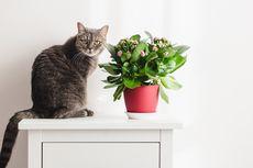 Kucing Suka Menjatuhkan dan Memecahkan Barang, Ini 3 Alasannya