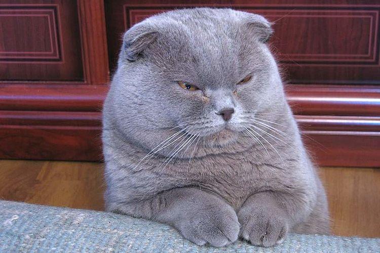 Inilah 5 Jenis Kucing Peliharaan Paling Populer Di Dunia Halaman All Kompas Com