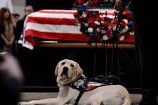 Sully, Anjing Mendiang Presiden George HW Bush Kini Punya Tugas Baru, Apa Itu?