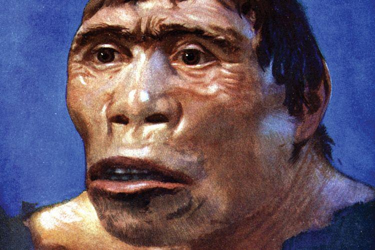 Pithecanthropus erectus atau Manusia Jawa