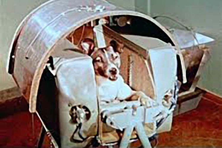 Laika, anjing pertama yang terbang ke luar angkasa