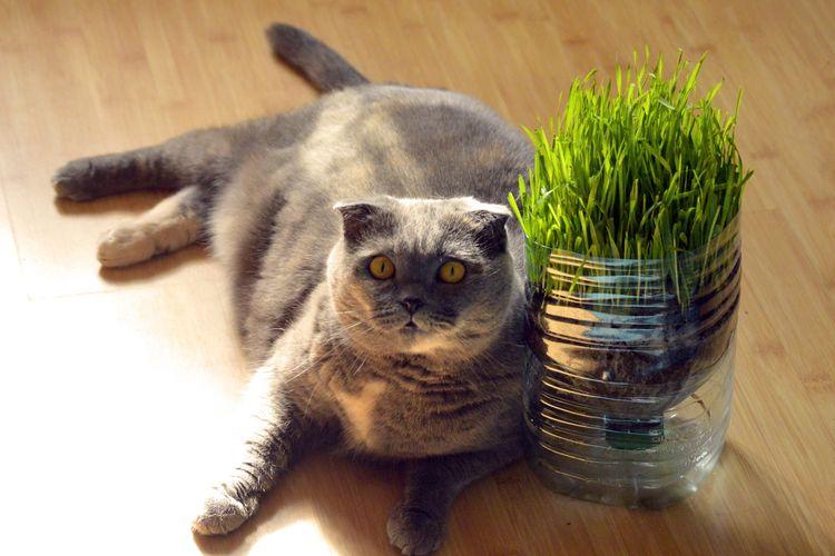Ilustrasi kucing dan rumput gandum.
