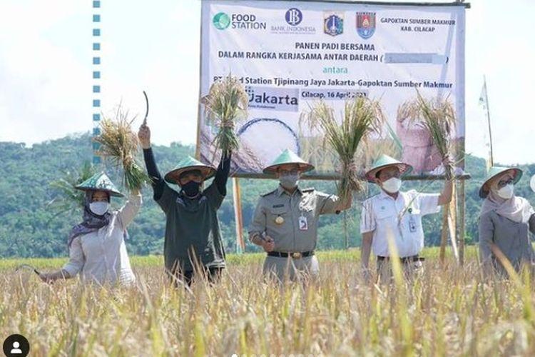 Gubernur DKI Jakarta Anies Baswedan melakukan panen padi bersama di Cilacap, Jawa Tengah 16 April 2021