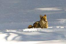Saat Hewan-hewan di Taman Nasional Yosemite, California Mendapatkan