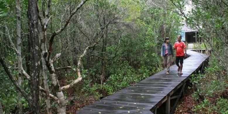 Pengunjung melintasi jalur tracking hutan mangrove di Karimunjawa melalui jalan setapak dari jembatan kayu.