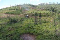 Jokowi: Penebangan Hutan di Indonesia Menurun Paling Signifikan dalam 20 Tahun Terakhir