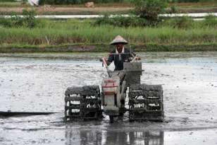 Seorang petani di Gorontalo membajak sawah dengan traktor tangan.