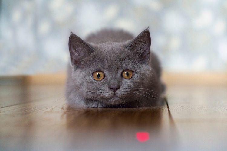 Ilustrasi anak kucing.
