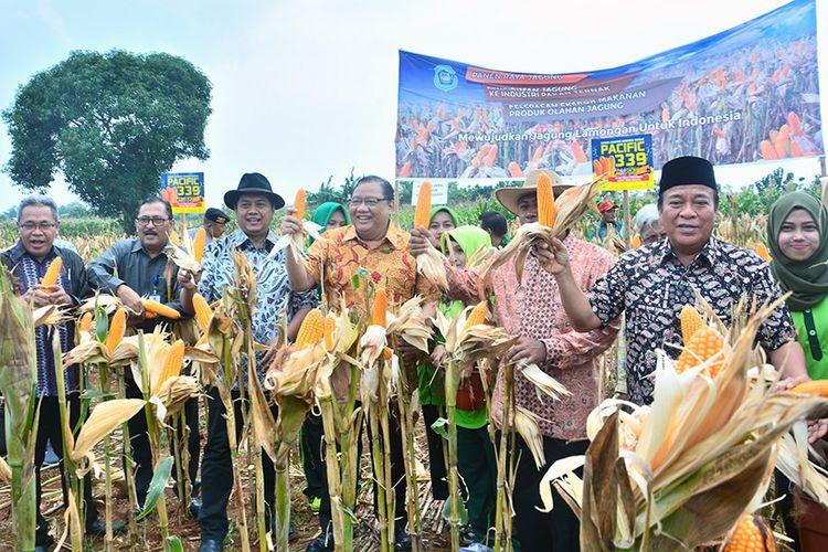 Menkop dan UKM Anak Agung Gede Ngurah Puspayoga (tengah), saat menghadiri panen raya jagung di Lamongan.