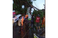 Dua Pohon Tumbang Saat Hujan Lebat di Jakarta Timur