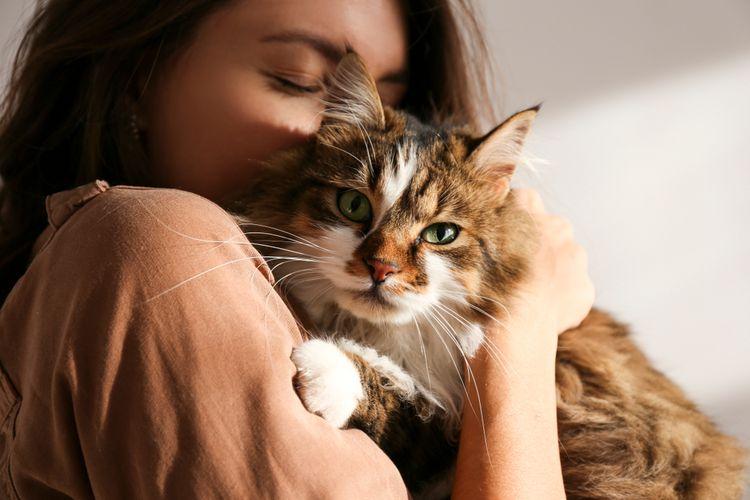 Ilustrasi kucing Ragamuffin.