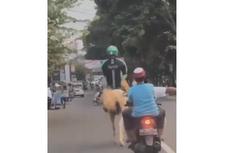 Viral Video Driver Ojek Online Naik Kuda Putih di Jalan Raya