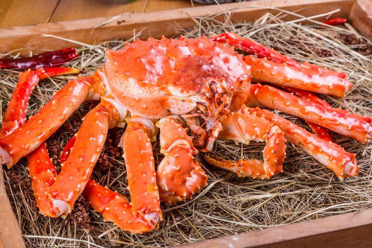 Ilustrasi king crab.