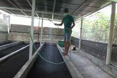 Cerita Rian Raup Jutaan Rupiah dari Ternak Cacing, Berawal Pekerjaan Terdampak Pandemi