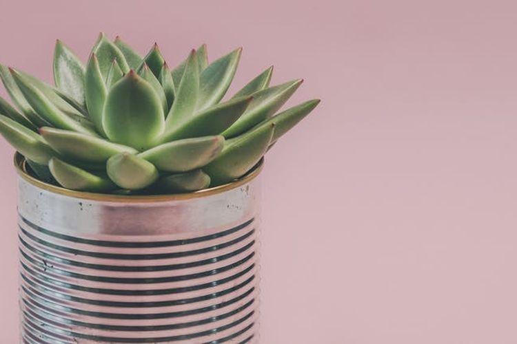 Ilustrasi pot tanaman dari kaleng bekas.