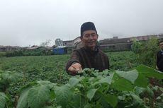 Kisah Ahmad Mu'tamir, Petani Kentang dengan Omzet Ratusan Juta Rupiah