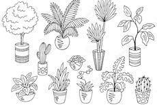 Soal UAS Biologi: Hormon-Hormon Pertumbuhan Tumbuhan