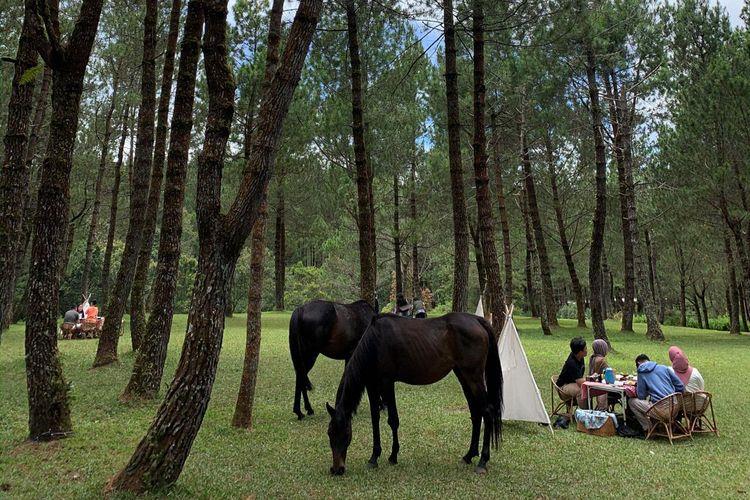 Pengunjung yang mengambil paket piknik juga bisa piknik sambil dikelilingi dengan kuda-kuda yang sedang merumpuh di kawasan Jungle Milk camping ground Lembang