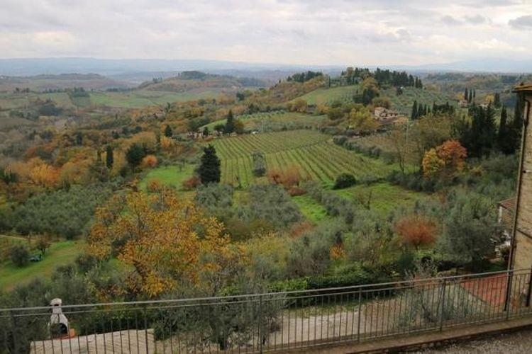 Hamparan perkebunan anggur dan pohon zaitun yang mengelilingi Kastil Vicchiomaggio, Greve in Chianti, Tuscany, Italia.