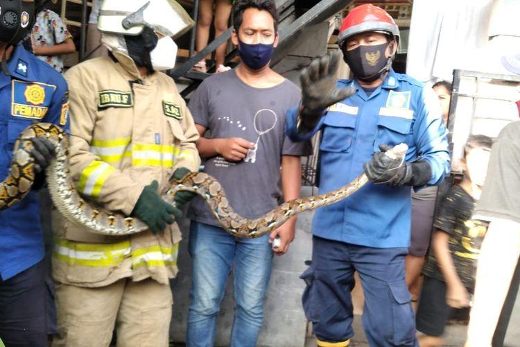 Petugas damkar berhasil mengevakuasi ular sanca sepanjang 2,5 meter di Jalan Warung Asem RT 11/RW04 Rawa Bunga, Jatinegara, Jakarta Timur, Jumat (12/3/2021).