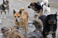 Cegah Virus Corona, Pemerintah Rusia Tangkap Anjing dan Kucing Liar Sekaligus Basmi Tikus