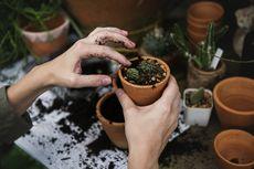 Ingin Tanaman Tumbuh Subur? Perhatikan Unsur Tanahnya