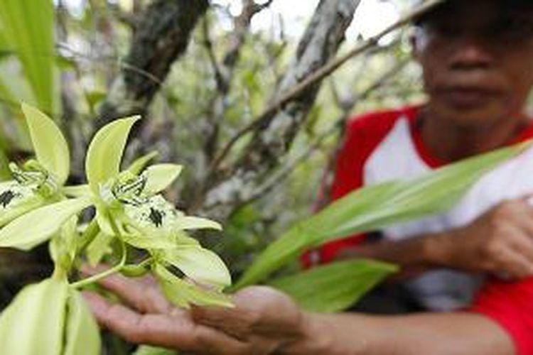 Petugas cagar alam, Didimus, menunjukan anggrek hitam (Coelogyne pandurata) satu dari 47 jenis anggrek yang hidup di Cagar Alam Kersik (padang) luway di Kecamatan Seqolak Darat, Kabupaten Kutai Barat, Kalimantan Timur, Selasa (5/11/2013).