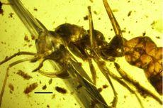 Ajaibnya Anatomi Semut Kuno, Bisa Menghisap Darah Seperti Vampir