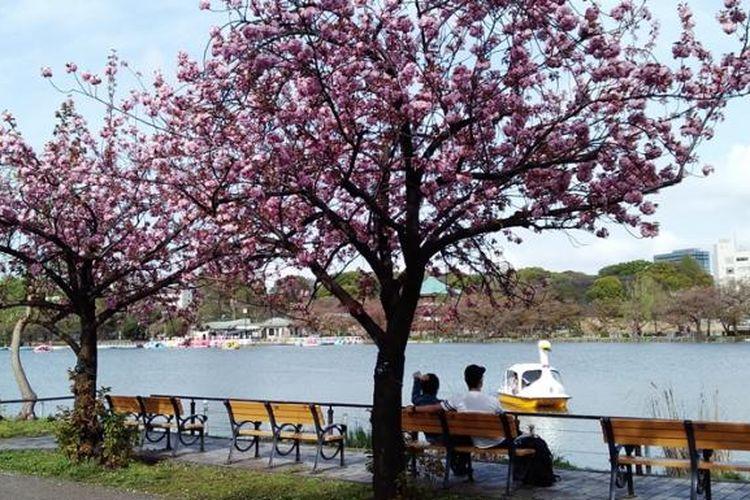 Suasana Ueno Park saat musim semi
