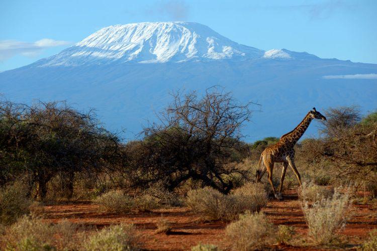 Gunung Kilimanjaro dilihat dari Amboseli National Park, Kenya.