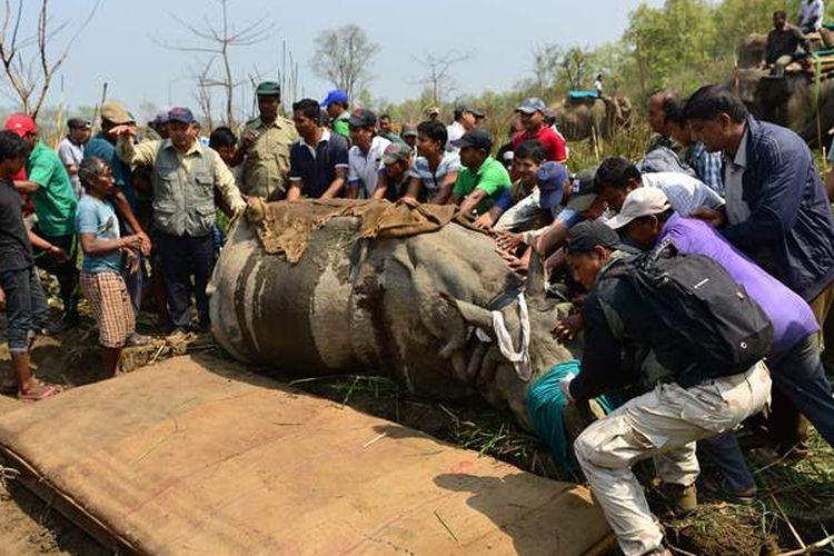 Para dokter hewan dan tim taman nasional berusaha memindahkan seekor badak bercula satu dari Taman Nasional Chitwan, 250 kilometer dari Kathmandu ke lokasi barunya.