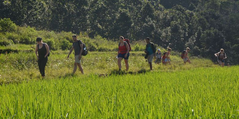 Turis Belgia berjalan di pinggir sawah Mbeling dengan padi yang hijau. Turis sangat menyukai wisata ekologi yang ditawarkan warga Mbeling, Desa Gurung Liwut, Kecamatan Borong, Manggarai Timur, Flores, NTT, Senin (14/8/2017).