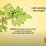 5 Ciri Khusus Hewan dan Habitatnya, Jawaban Soal TVRI 19 Agustus 2020