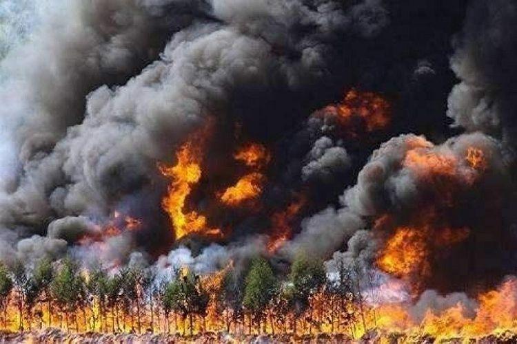 Kebakaran ini terjadi di wilayah pegunungan dengan ketinggian 3.800 meter di atas permukaan laut.
