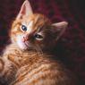 Benarkah Madu Bisa Meracuni Kucing?