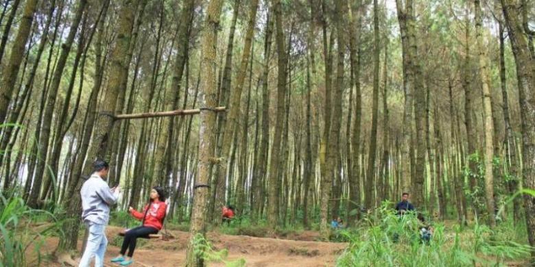 Pengunjung bersantai di kawasan Hutan Pinus, Kragilan.