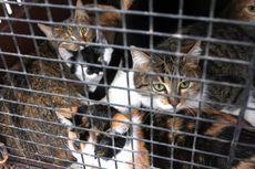 Polisi Didorong Usut Tuntas Kasus Laki-laki Makan Kucing Hidup