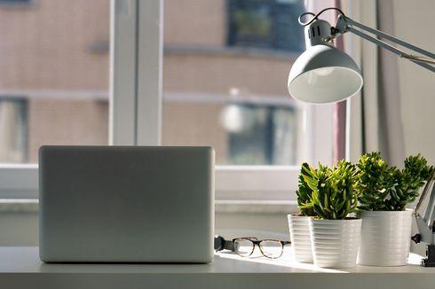 5 Rekomendasi Tanaman Hias untuk Mempercantik Ruang Kerja