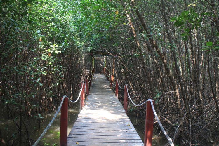Wisata hutan mangrove di Desa Ketah Kecamatan Suboh Kabupaten Situbondo
