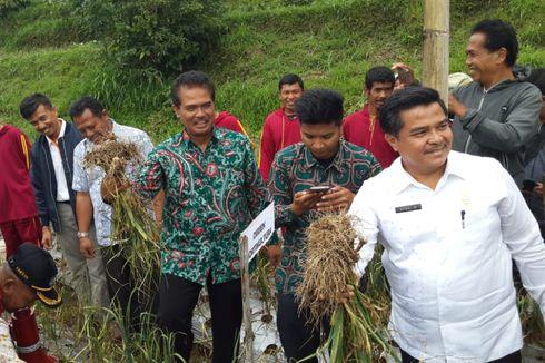Solok Bersiap Jadi Sentra Bawang Putih di Indonesia