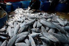 Erick Thohir Perintahkan Perum Perindo Serap 3.000 Ton Ikan per Bulan