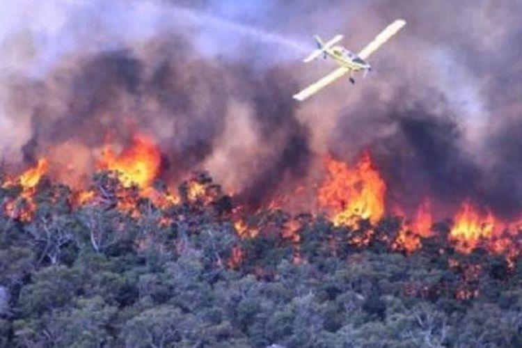 Pelaku Pembakaran Hutan Dan Lahan Terancam 12 Tahun Penjara