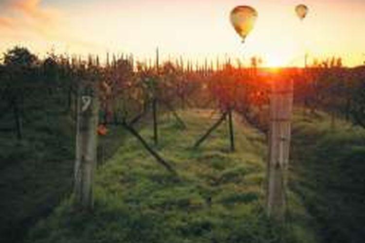 Perkebunan anggur di Hunter Valley, New South Wales, Australia